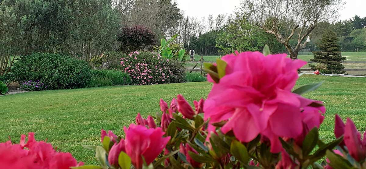 cote-et-jardins-paysagiste-pornic-amenagement-paysager-massifs-parcs-et-jardins