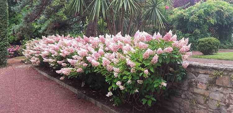 cote-et-jardins-paysagiste-pornic-massif-fleuri