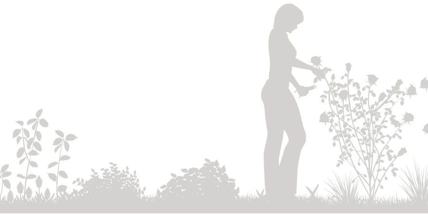 cote-et-jardins-paysagiste-entretien-espaces-verts-service-a-la-personne-taille-arbustes-rosiers-plantes